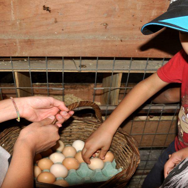 Μάζεμα αυγών